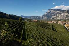 Weingut Endrizzi - Event area in San Michele all'Adige - Exhibition