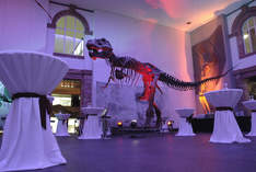 Senckenberg Naturmuseum - Eventlocation in Frankfurt (Main) - Firmenevent
